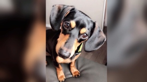 Woman says vet euthanized the wrong dog