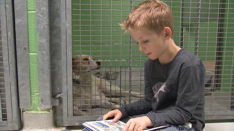 Thomas Stoop, 7, reads to a dog at the Toronto Humane Society. (Corey Baird/CTV News Toronto)