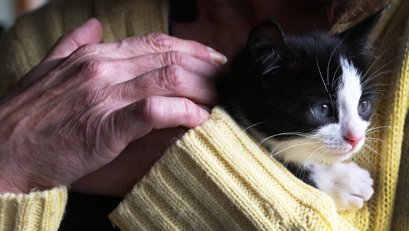 Carol Hull holds a feral kitten she rescued, at her home in Little Bay Islands, N.L, on Friday, November 15, 2019. (THE CANADIAN PRESS/Paul Daly)