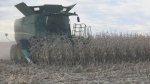 Lawsuit could bring corn farmers big payday