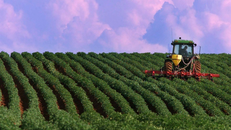 A farmer works a potato field in North Tryon, Prince Edward Island on Thursday, July 13, 2000. (THE CANADIAN PRESS / Andrew Vaughan)