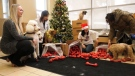 Canines with cancer given a Christmas surprise