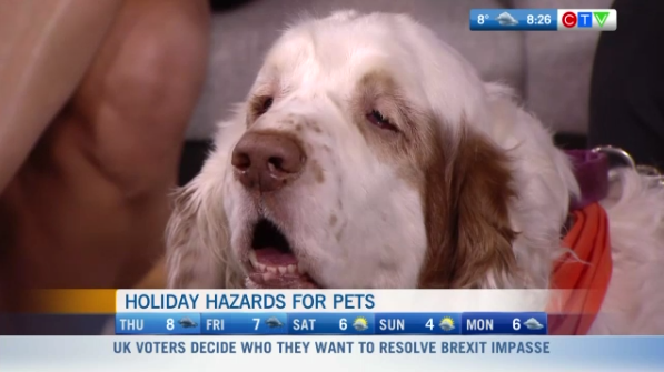 Hazards for pets