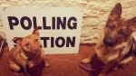 CTV National News: Pets head to polling stations