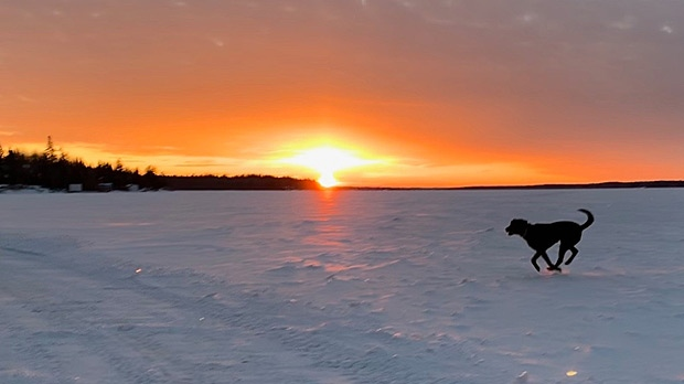 Coco at Barrier Bay in the Whiteshell. Photo by Sandy Nitzsche.