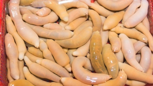 Urechis unicinctus, known as penis fish, innkeeper worm or spoon worm, is shown in this file photo at a market in South Korea (Photo: iStock / Arrlxx)