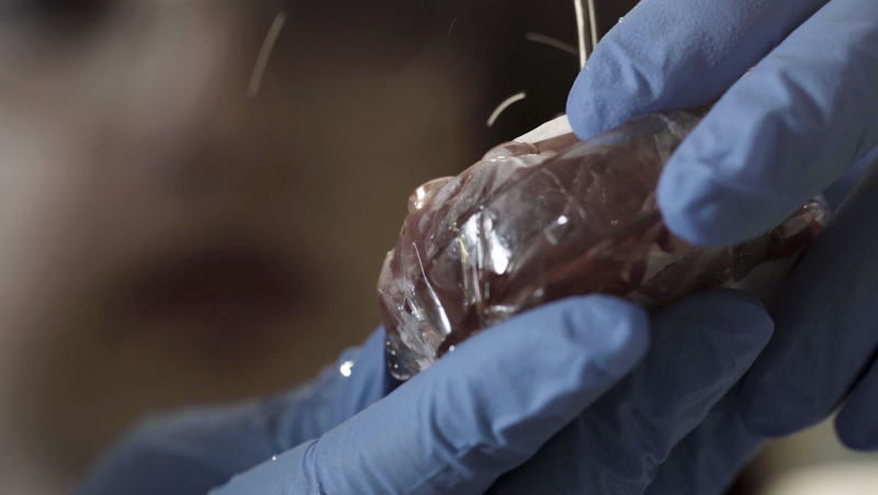 McMaster University scientists say they have developed a 'self-cleaning' plastic that can prevent bacteria and viruses from sticking and proliferating on its surface.