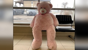 A massive pink Teddy Bear is found in the area of Yonge Street and 7th Line in Innisfil and now sits at the South Simcoe Police North Division station. (Supplied)