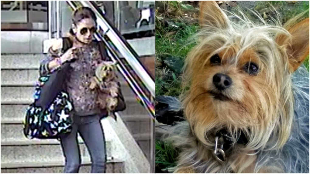 Woman who allegedly stole dog from unconscious woman on TTC wanted by police