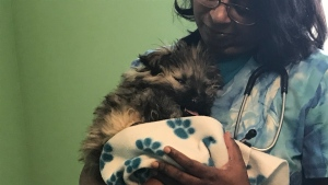 Christmas the dog snuggles with veterinarian Inoka Gamage. (Chad Leroux/CTV Saskatoon)