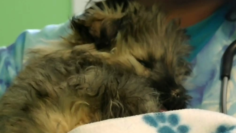 Blind puppy recovering after rescue