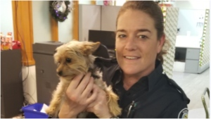 A dog named Charlie has been located after he was allegedly stolen while its owner was unconscious and suffering from a medial emergency on the TTC in October. (Toronto Police Service)