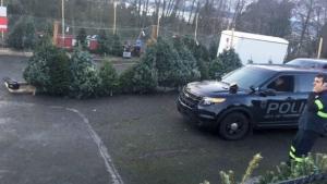 Christmas tree caper