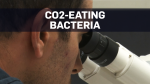 Scientists create bacteria that eats CO2