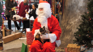 Santa posed for pictures with pets at Pet Planet in Saskatoon. (Chad Leroux/CTV News)