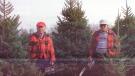 CTV National News: The family run tree farm