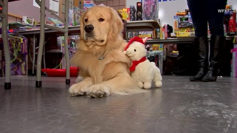 Police therapy dog caught taking holiday toy donations