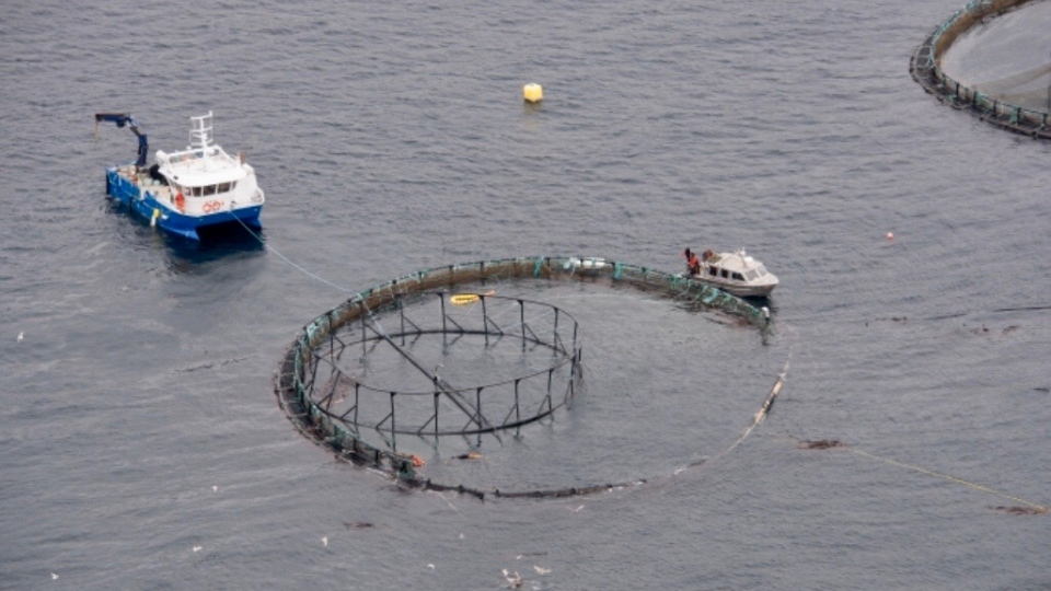 Fire damaged a fish farm pen near Port Hardy, B.C. on Dec. 20, allowing nearly 21,000 non-native Atlantic salmon to escape into the ocean. (Submitted/Tavish Campbell)