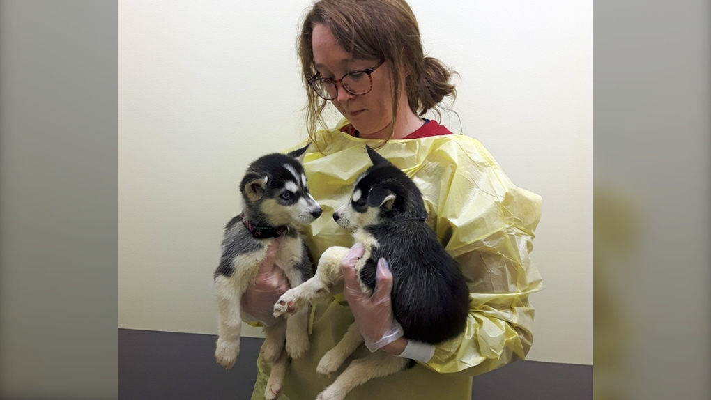 17 puppies and 2 adult dogs rescued in B.C. Interior on Christmas Eve