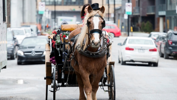 Will the 'old Montreal magic' disappear with the city's horse-drawn carriages?