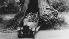 "A packed vehicle is parked inside ""The Big Hollow Tree"" in Stanley Park in this photo from 1923. (City of Vancouver Archives)"