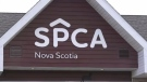 On Thursday, the Nova Scotia SPCA was awarded legal custody of the seized dogs after an appeal made by Karin Robertson, who has been charged with two counts of animal cruelty.