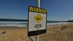 A diver was killed by a shark off Western Australia. (AFP)