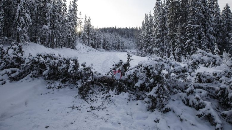 Trees fell across the road block access to Gidimt'en checkpoint near Houston B.C., on Wednesday January 8, 2020. The Wet'suwet'en peoples are occupying their land and trying to prevent the Coastal GasLink pipeline from going through it. JASON FRANSON / THE CANADIAN PRESS