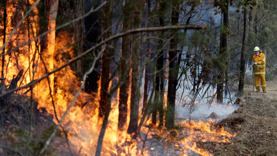 In this Wednesday, Jan. 8, 2020, file photo, a firefighter manages a controlled burn near Tomerong, Australia, set in an effort to contain a larger fire nearby. (AP Photo/Rick Rycroft, File)