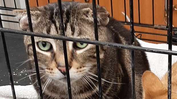 Dozens of animals are rescued in extremely poor condition from an Alliston home on Wed., Jan. 8, 2020. (Supplied)