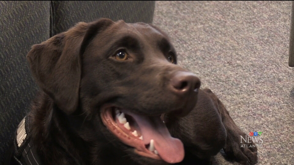 Therapy-dog trains to help police officers in dist