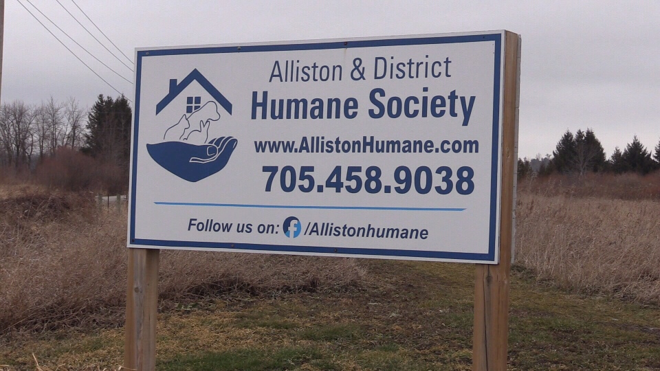 The animals are being cared for by volunteers at the Alliston and District Humane Society after being rescued on Wed., Jan. 8, 2020. (Mike Arsalides/CTV News)