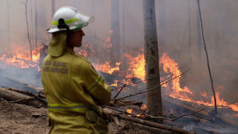 A firefighter keeps an eye on a controlled fire as they work at building a containment line at a wildfire near Bodalla, Australia, Sunday, Jan. 12, 2020. (AP Photo/Rick Rycroft)