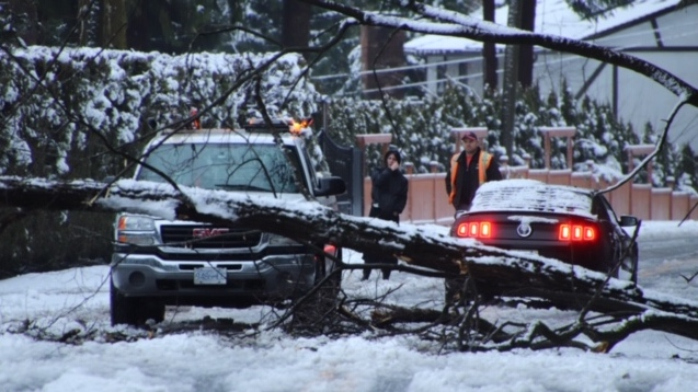 Trees down, power out, ferries cancelled – and snowfall warning continues for Metro Vancouver