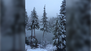 A photo from Gail Jensen shows snowy trees in Metro Vancouver.