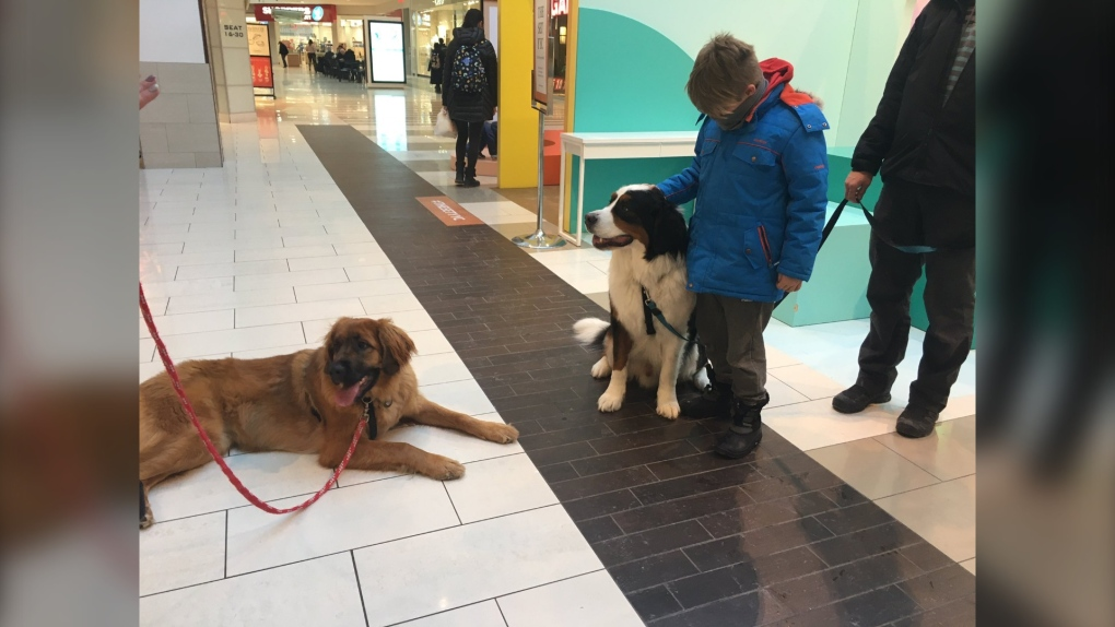 Southcentre, Mall, dogs, Kat Macaulay