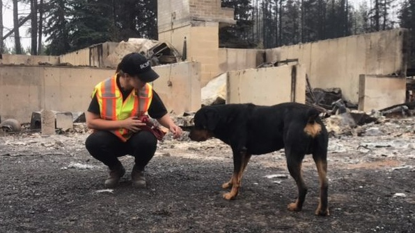 The animal rescue organization has released a petition urging residents to speak out on animal welfare during local disasters.