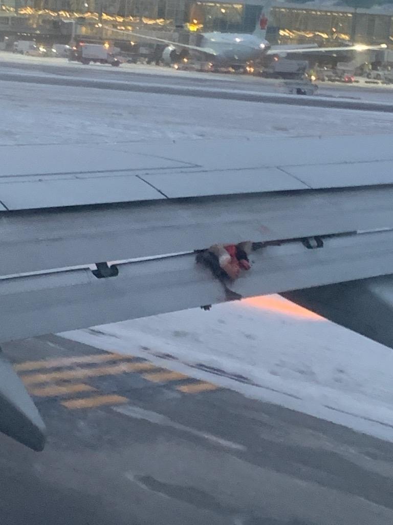WestJet bird plane