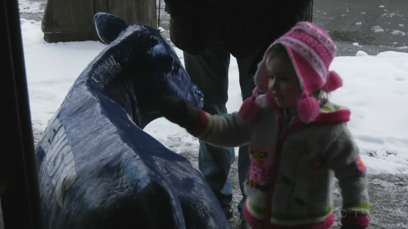 Adam finds out how a two-year-old Victoria girl and blue cow statue inspired an unexpected act of kindness.