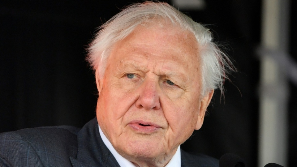 Attenborough is renowned for his ground-breaking wildlife programmes for the BBC. AFP