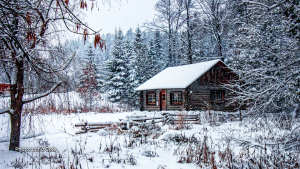 Cabin in the woods. (Lana Cole/CTV Viewer)