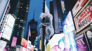 Koalas of NYC is an ongoing gofundme campaign to raise money to help wildlife in Australia that has been devastated by raging brushfires. SOURCE Koalas of NYC gofundme