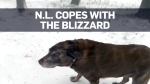 N.L residents face the cold of a monster winter st