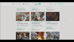 GoFundMe campaigns for animals caught in the Australia fires.