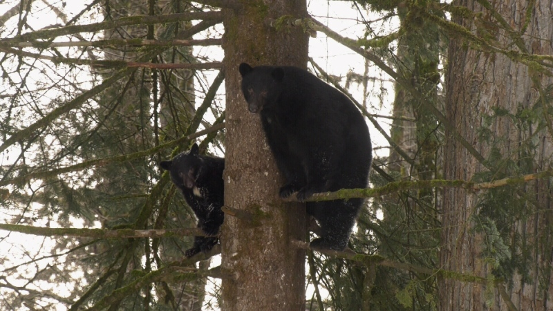 Tree bears: Jan. 17, 2020