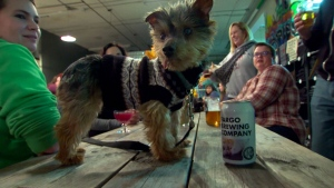 U.S. brewery put adoptable dogs on beer cans
