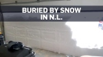Record-setting snowfall blankets Newfoundland and