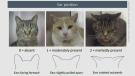 CTV National News: A feline's face