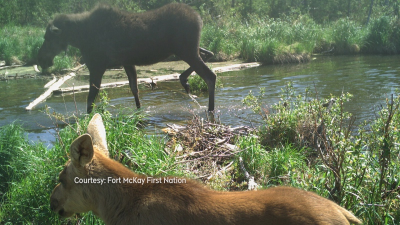 Fort McKay wildlife footage