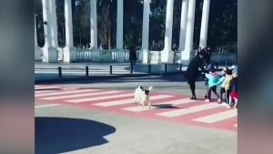 Dog crossing guard
